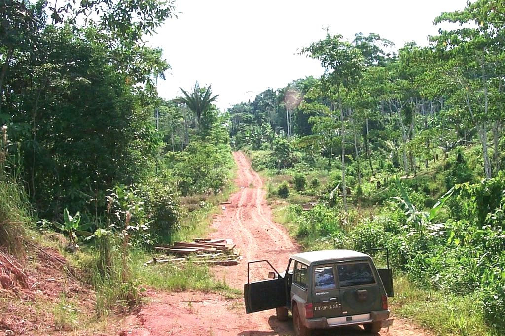 Ecuador, Orellana Province, the Amazon rainforest